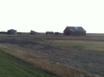Some Well Worn farm buildings just outside of Vulcan, Ab